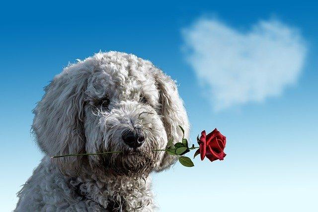 pies z kwiatkiem